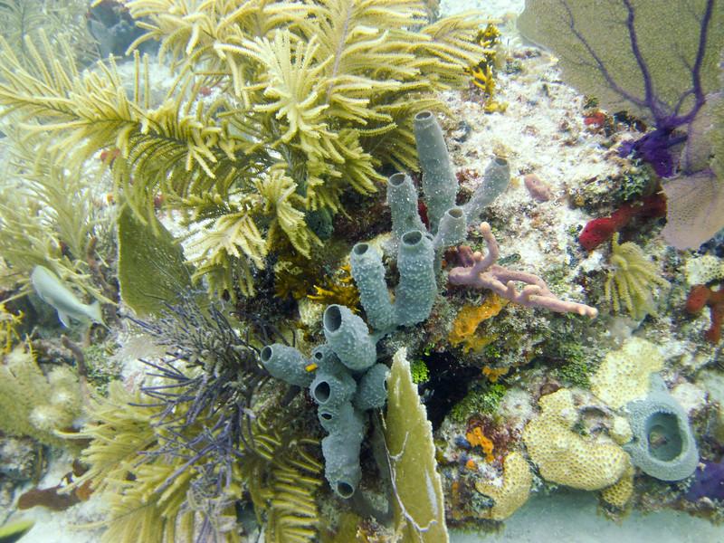 islamorada-diving-60.jpg