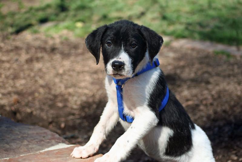 michelle puppy 3.jpg