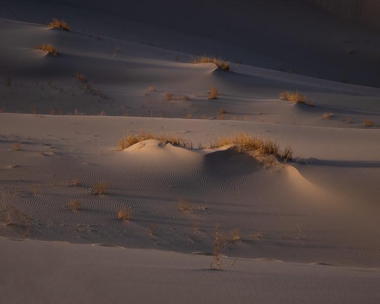 Dune Grass, Eureka Dune–Death Valley NP
