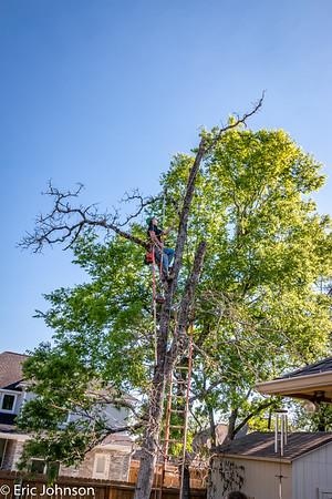 Backyard dead tree removal