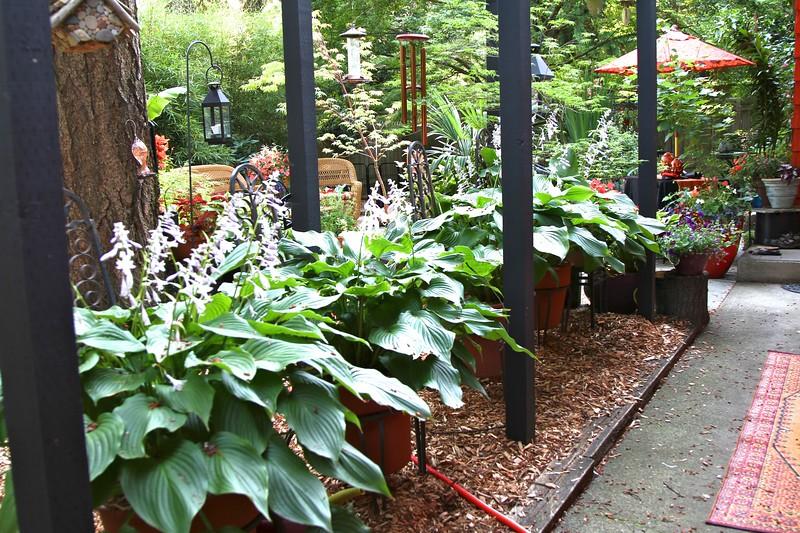 My garden on July 4, 2012
