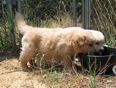 Hopps and Barley - adopted July 2008