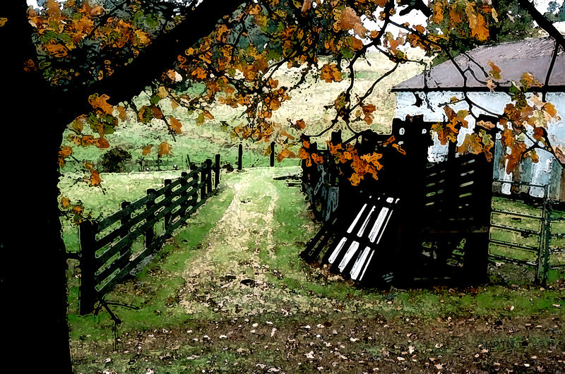 barnyard 4-10-2009.jpg