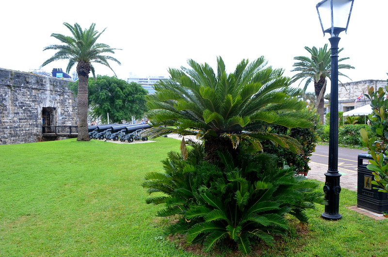 Very cool palm trees