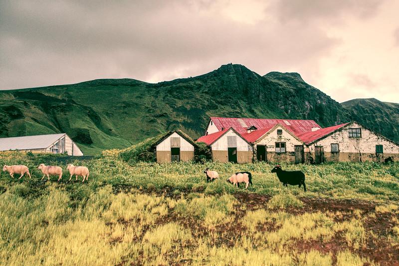 Iceland 3535.jpg