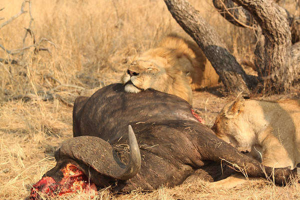 2010 South Africa, Botswana, Namibia and Zambia (2)