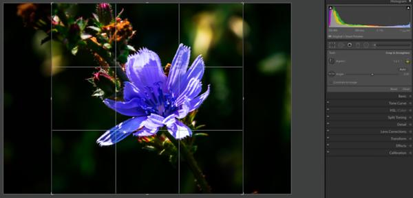 1:1 crop from the Original photo's Crop Overlay