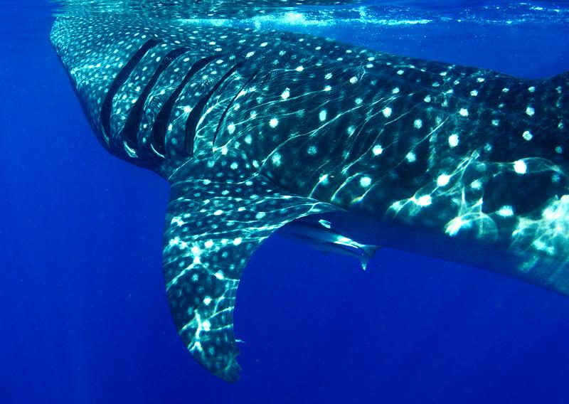 2014 Whale Shark - Cave Adventure-54.jpg