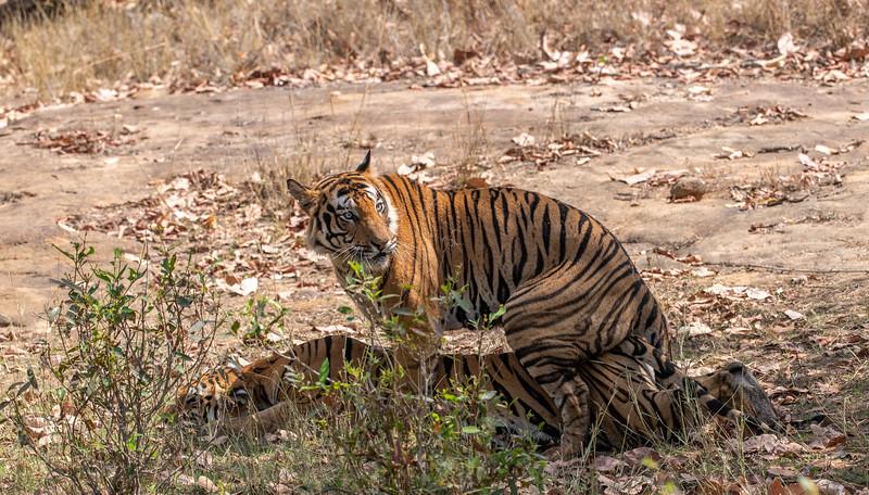 India_April_2019-910.jpg