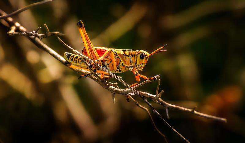 Grasshoppers 110.jpg