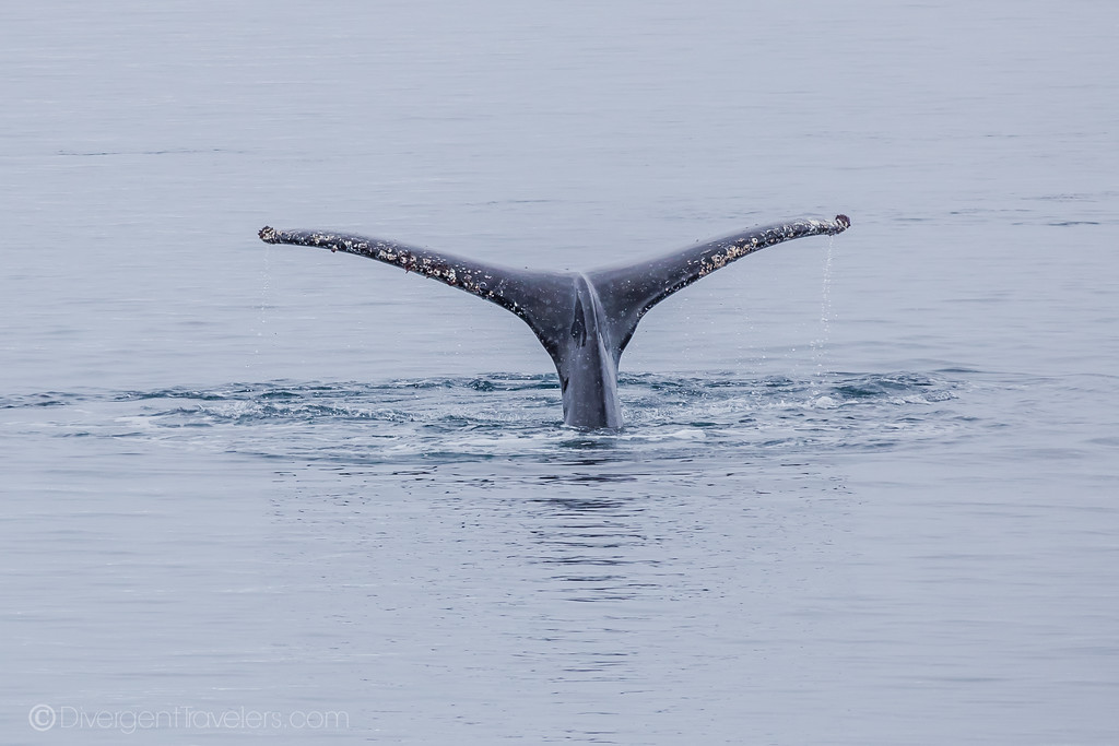 Best Day Trips from Reykjavik - Whale Watching