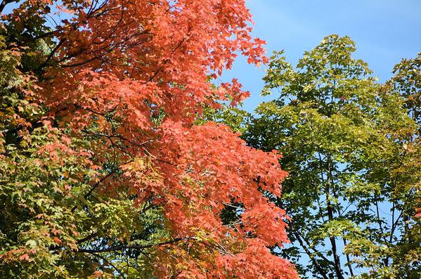 Autumn in High Park (September 2014)