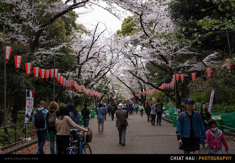Japan_Tokyo_Apr_2016-337.jpg