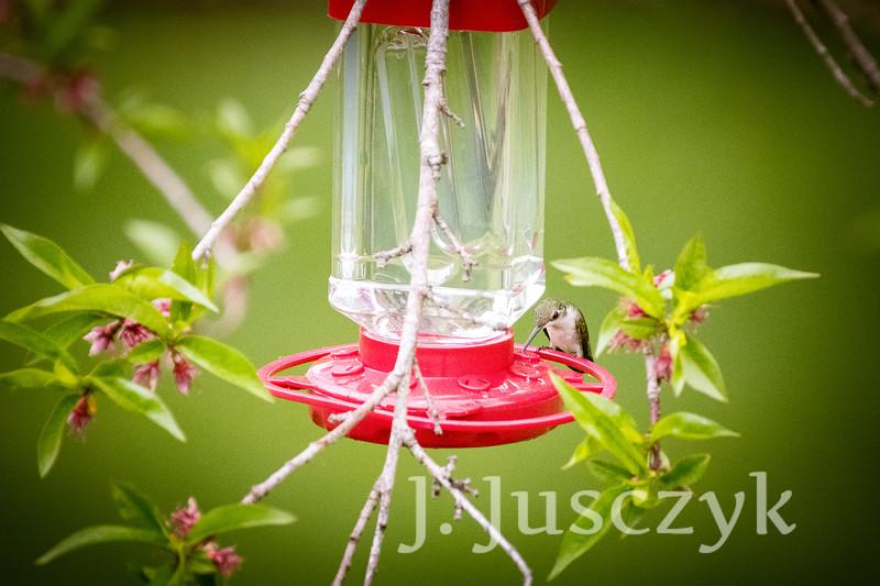 Jusczyk2021-9744.jpg