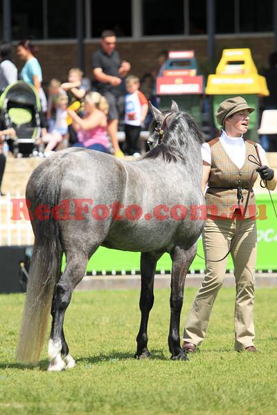 2014 09 29 Perth Royal Show APSB Connemara