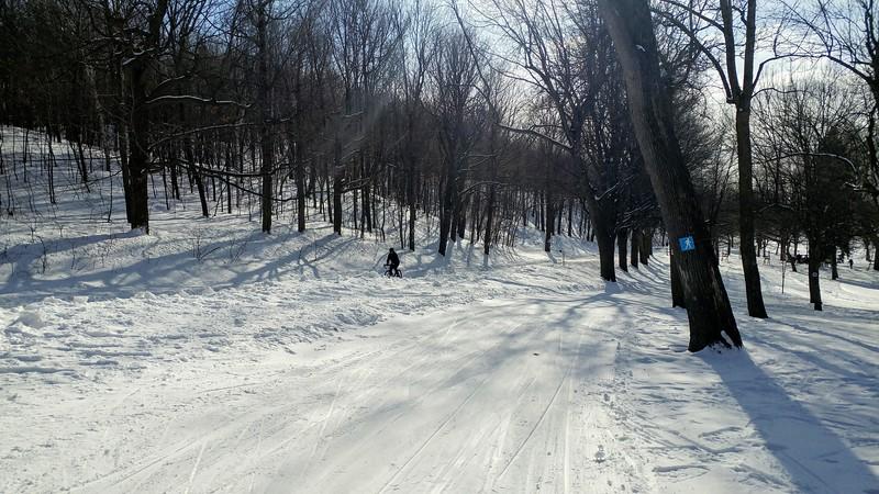 Powder white trails keading through trees