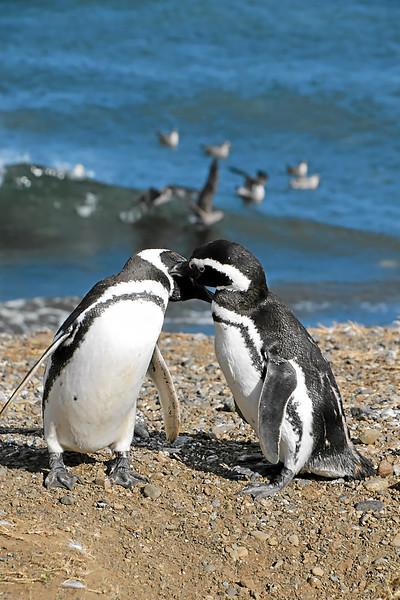 Penguin_Colony_082.jpg