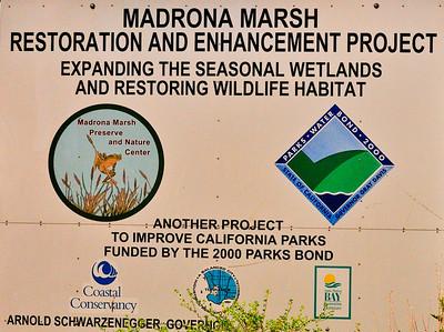 Madrona Marsh