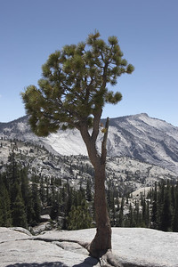 Yosemite Olmsted Point & Tuolumne Meadows