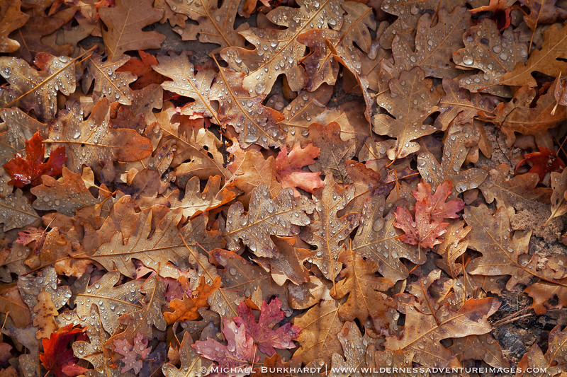 Zion_NP_2014_Leaf_Litter_Fall_102.jpg