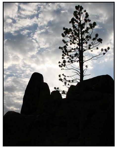 Tree-Against-Sky.jpg