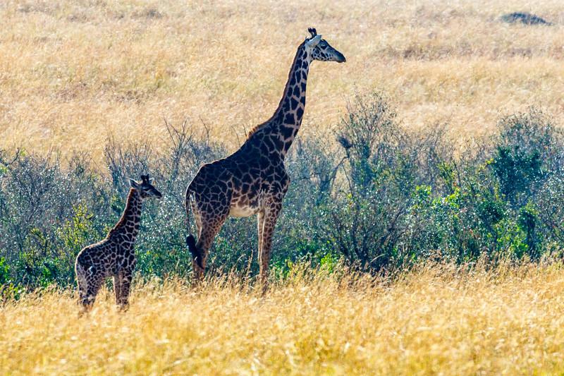 Kenya 2015-06529.jpg
