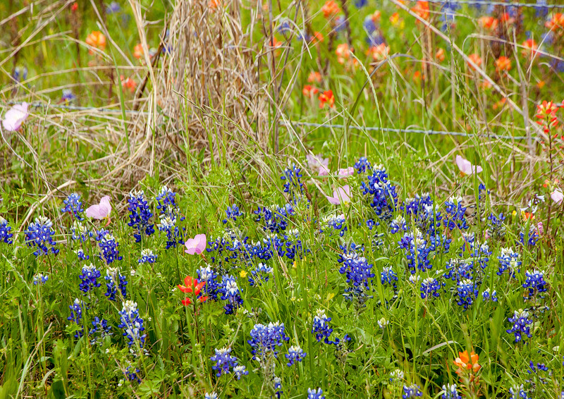 2016_4_9 Texas Wildflower Shoot-8518.jpg