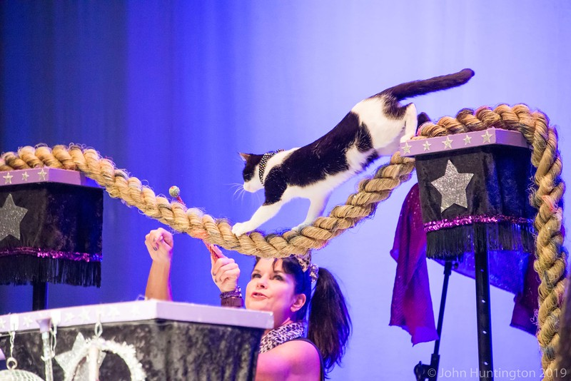 Amazing Acrocats, September 10, 2017, Brooklyn Music School