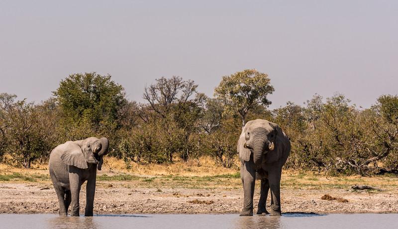 Botswana_June_2017 (1925 of 6179).jpg