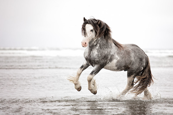 Long Beach Horses