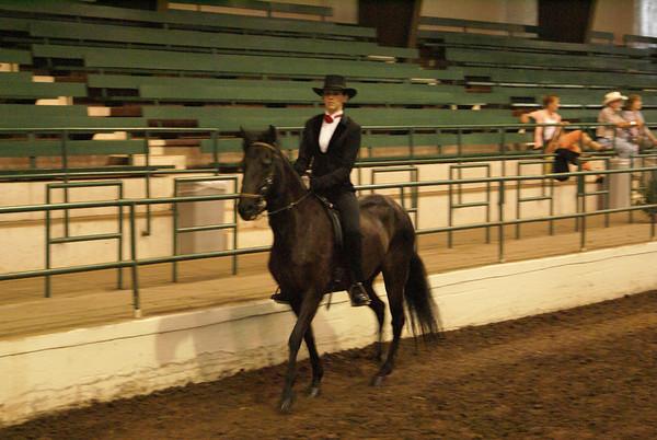 Paso Fino Horse Show, Springfield, MO June14&15th 2008