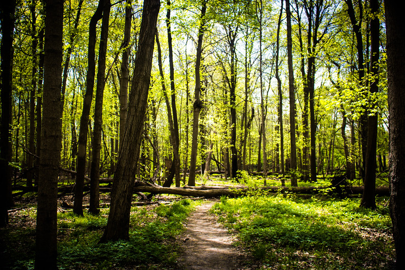 Walk in the Woods, Naperville, Illinois