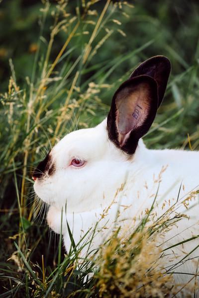 Rabbit Revolution