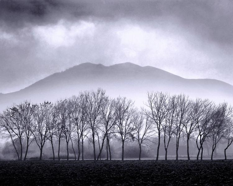 TreesFog.jpg