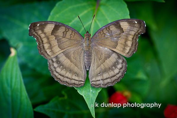 butterflies, bees & birds