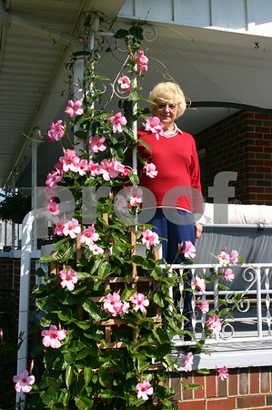 Dorothy Tipton Flowering Vine - October 2005