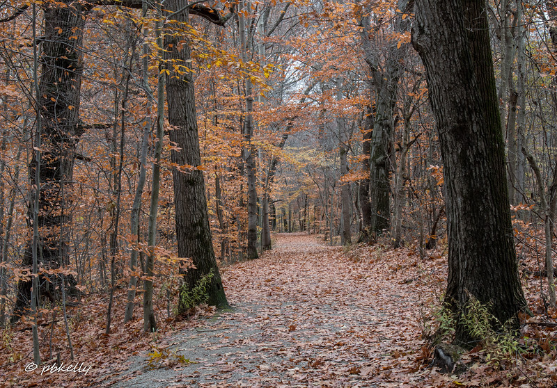 fall scene 111917-1.jpg