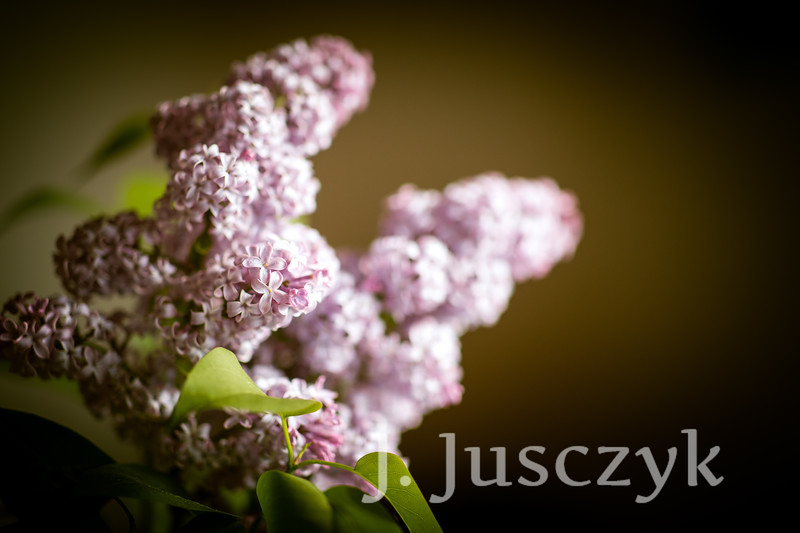 Jusczyk2021-9678.jpg