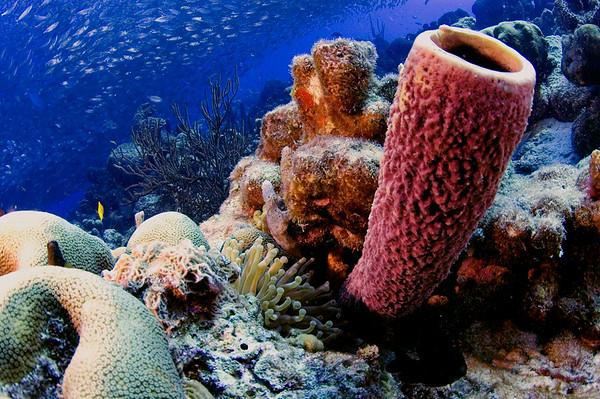 Keith's Underwater Photography