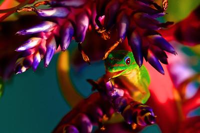 Don Geckos and Birds
