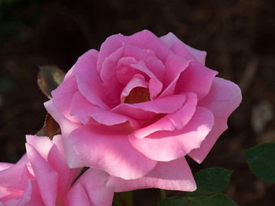 Rose Garden_June 16, 2014