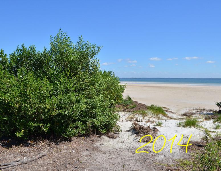 Bush_beach.jpg