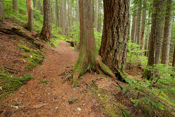 Rampart Ridge Trail - Mt. Rainier National Park,  January 28, 2014