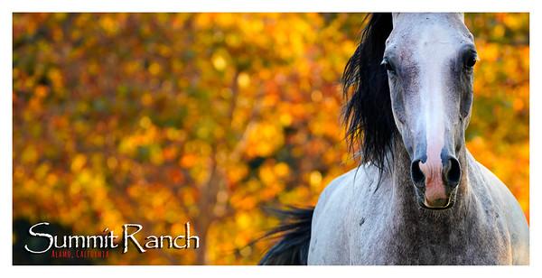 Summit Ranch ~ Alamo, California