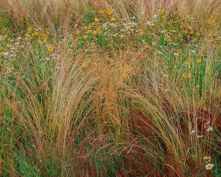 Roadside Meadow I