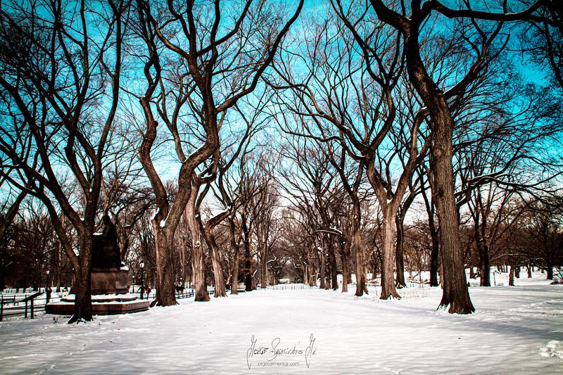 central-park-new-york-newark-new-jersey-photographer-photography-jorge-sarmiento-jr-IMG_7332.jpg