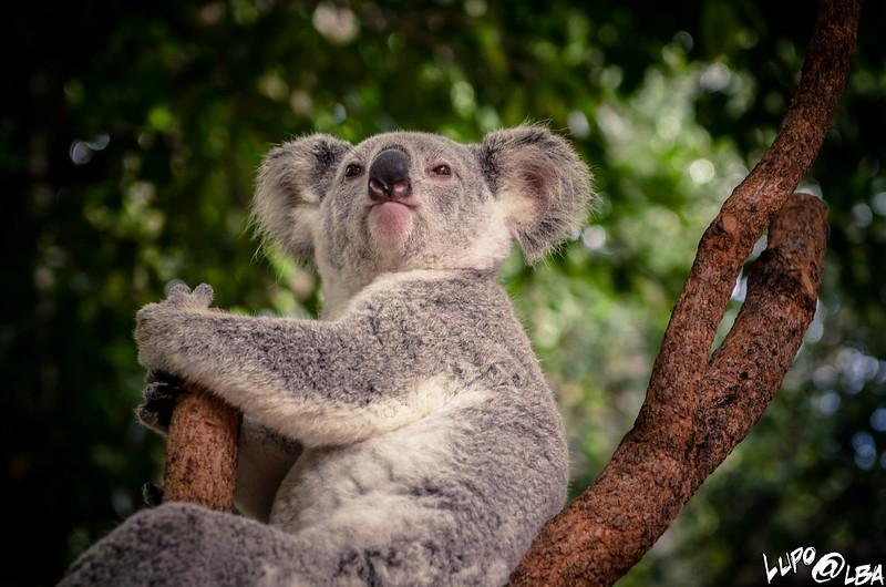 Australia-1136.jpg