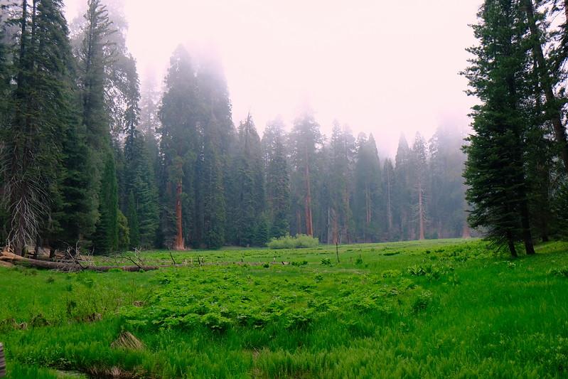 California Day 6 Sequoia 05-30-2017 84.JPG