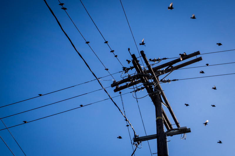 February 11 - Birds, wires and a pole in the midday sun.jpg