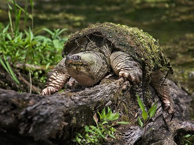 Wildlife in the Cuyahoga Valley National Park